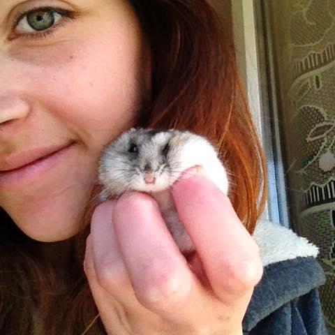 Photos de vos hamsters russes  12107710