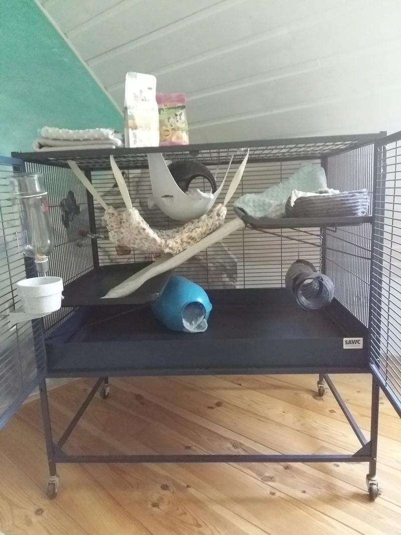 Avis aménagement cage Savic Suite Royale  Img_2012