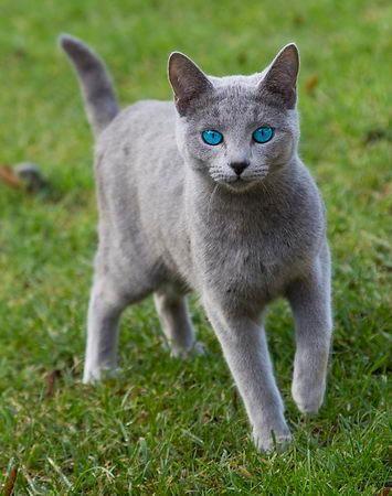 Du oder deine Haustiere als WaCa Katze! (Hilft bei langeweile!) Ich10