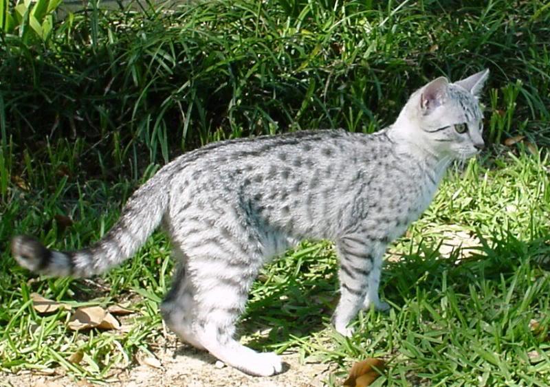 Du oder deine Haustiere als WaCa Katze! (Hilft bei langeweile!) Tim11