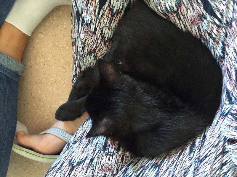milord - Milord, chaton noir né le 01/05/2016 Image13
