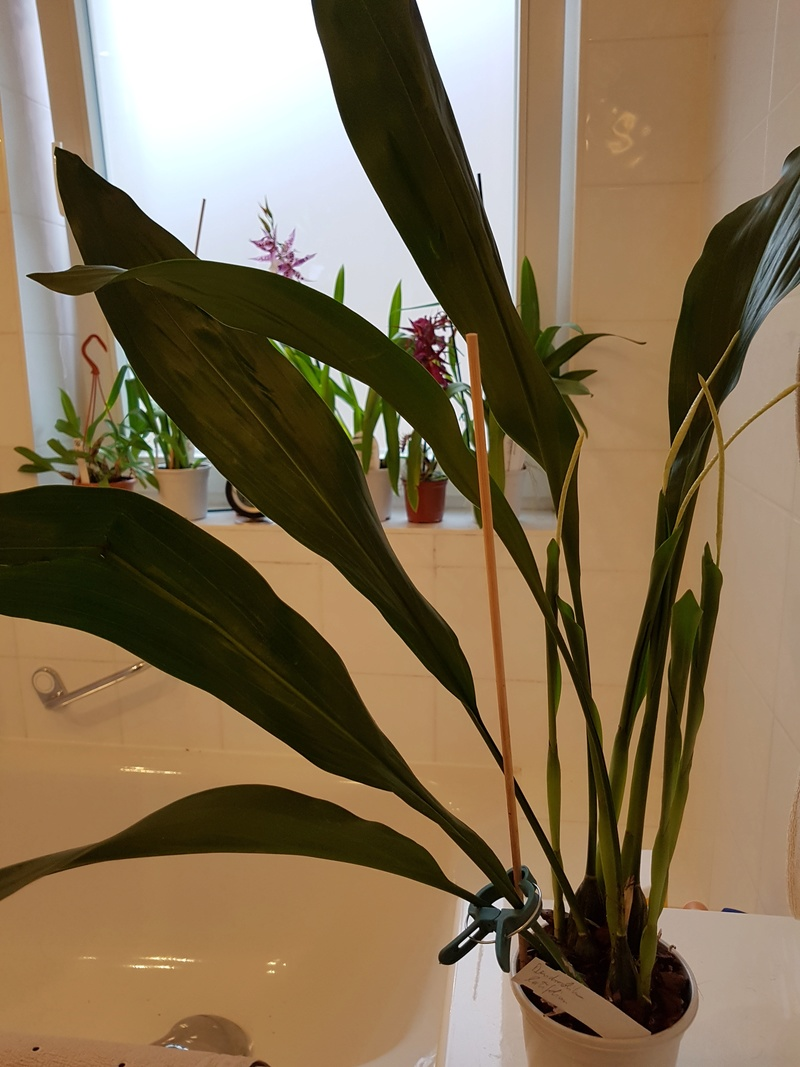 meine übernommenen Pflanzen 2016-052