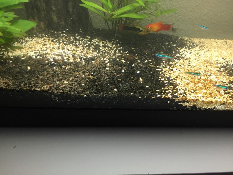 besoin d'aide pour nettoyer le sol de mon aquarium Img_0713