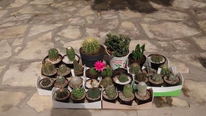 Hello from Evesham UK Cacti_11