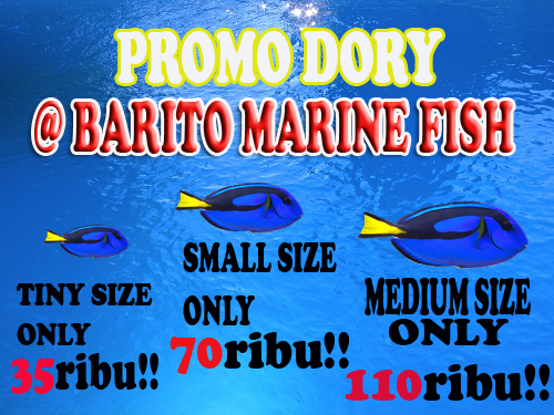 Promo Dory @BARITO MARINE FISH 78318310