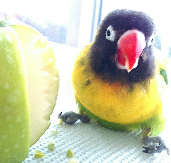 Oiseaux handicapés : quels soins et aménagements ? Screen10
