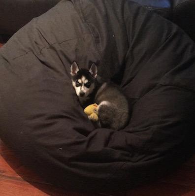 Please advice on Nature's Variety Instinct food for my Husky Puppie Lula_015