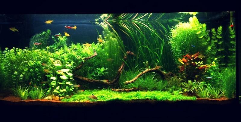 projet de mettres des plantes  Aquari11