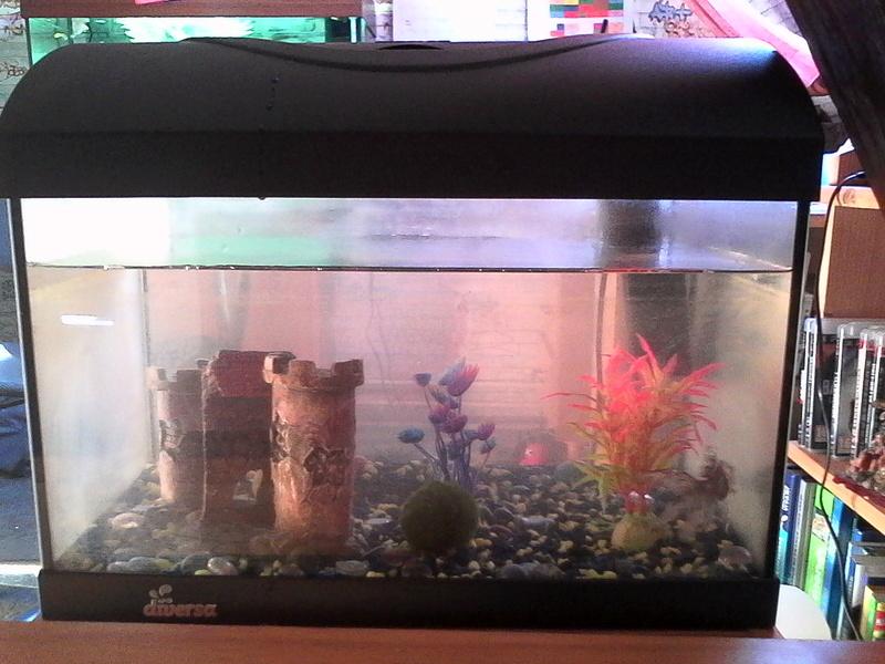 mes 3 aquariums Img_2010