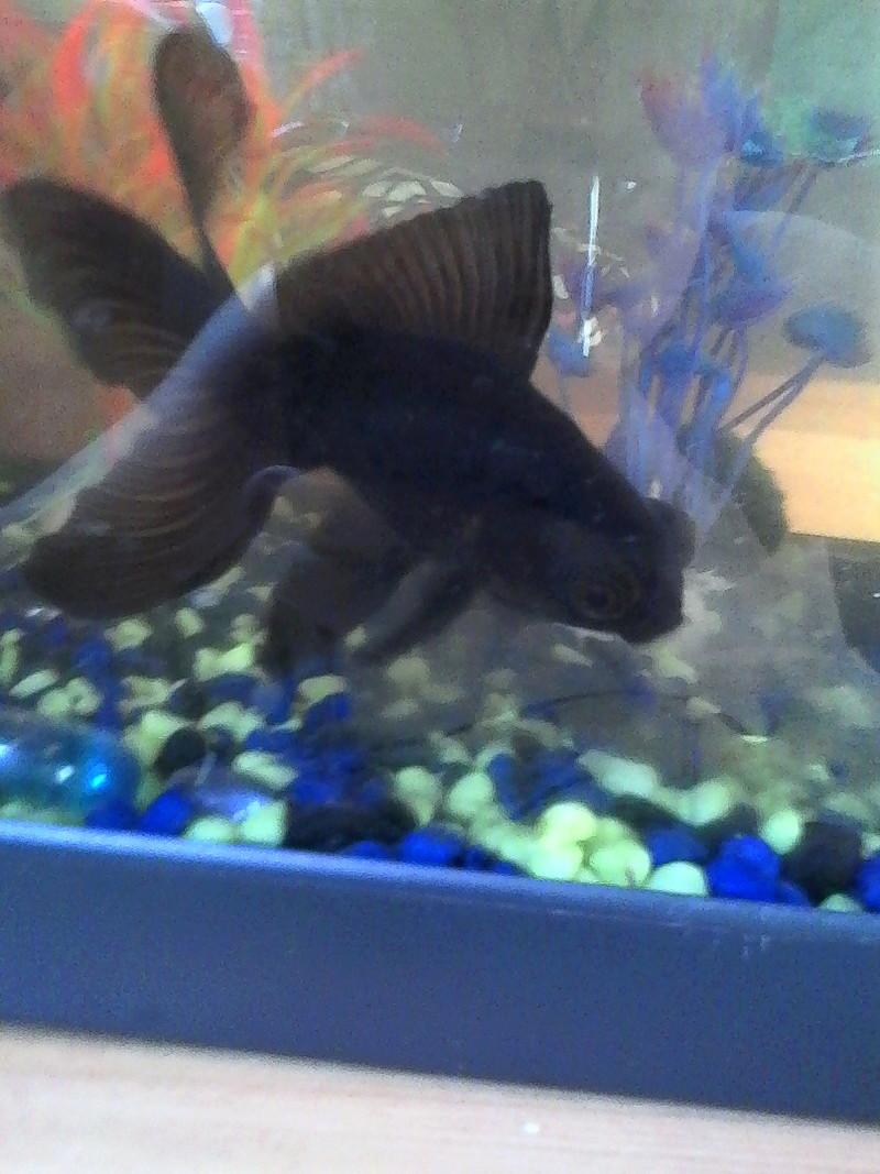 mes 3 aquariums Img_2011