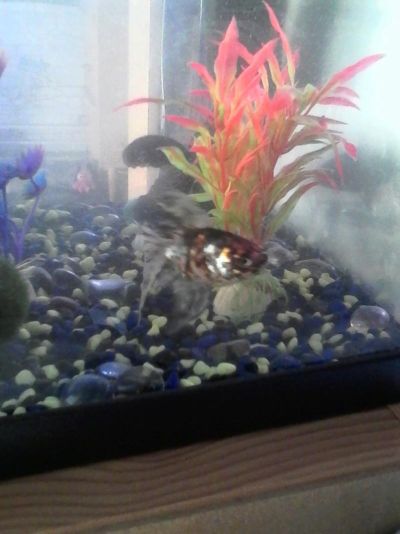 mes 3 aquariums Img_2012