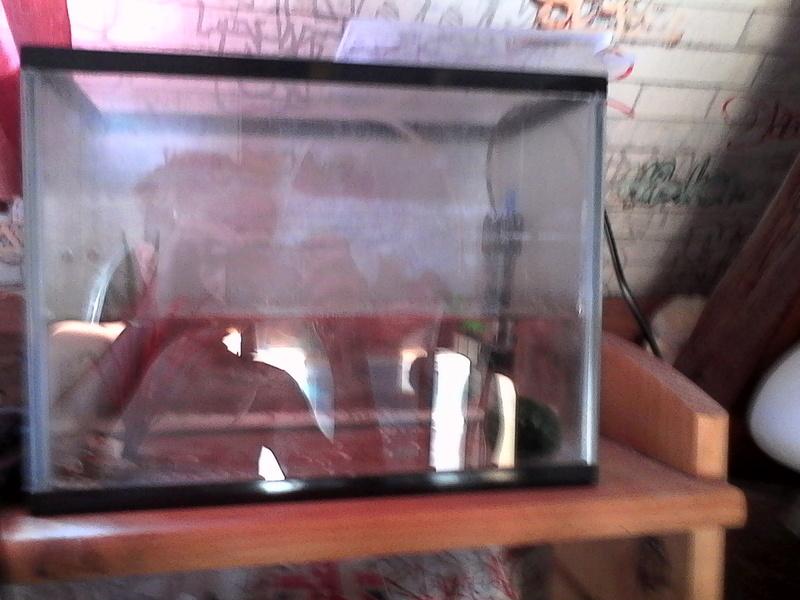 mes 3 aquariums Img_2013