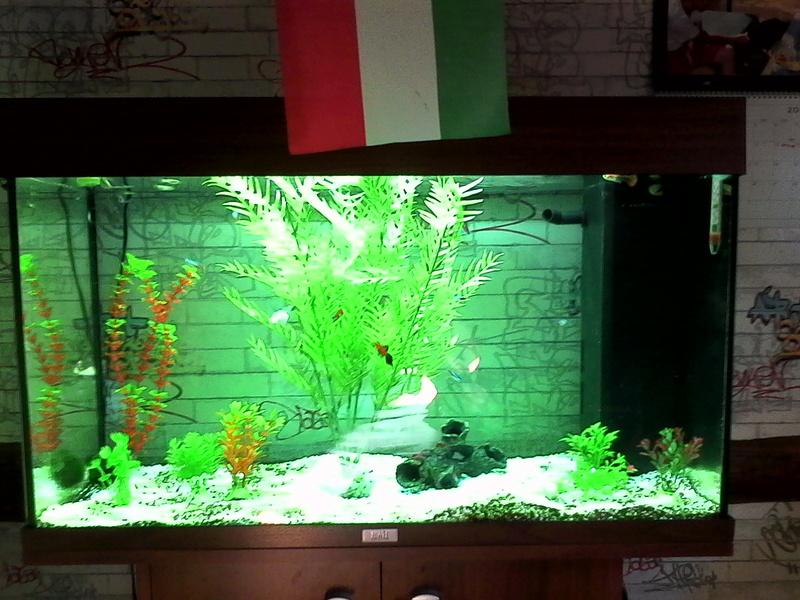 mes 3 aquariums Img_2016