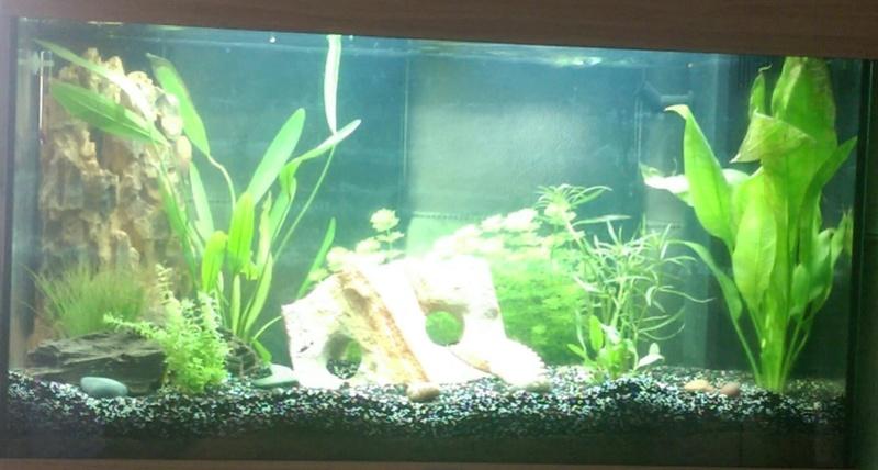 Algues dans aquarium récent Imag0210