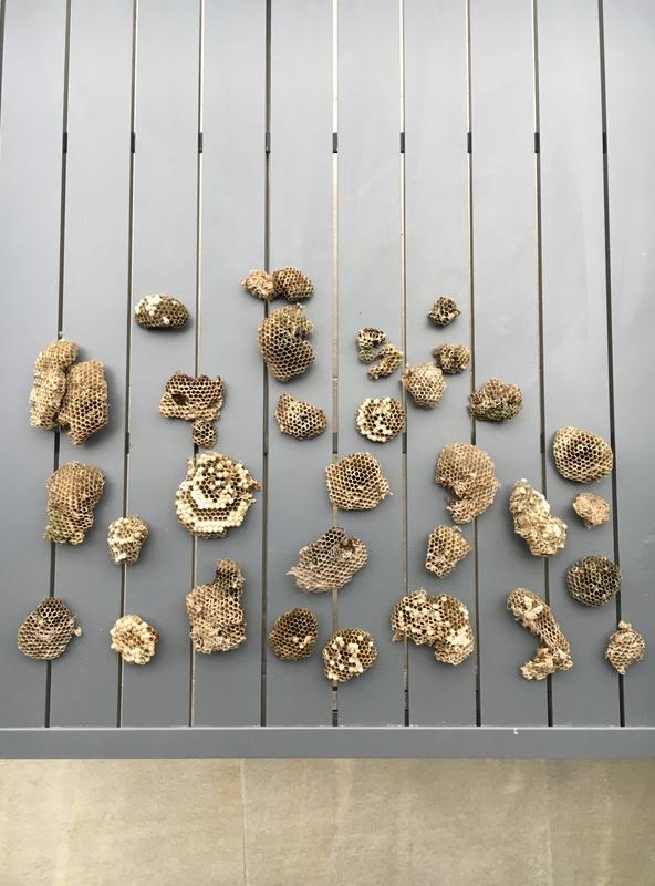 Help nombreux nids de guêpes maçonnes sous terrasse en composite et sous toiture Image10