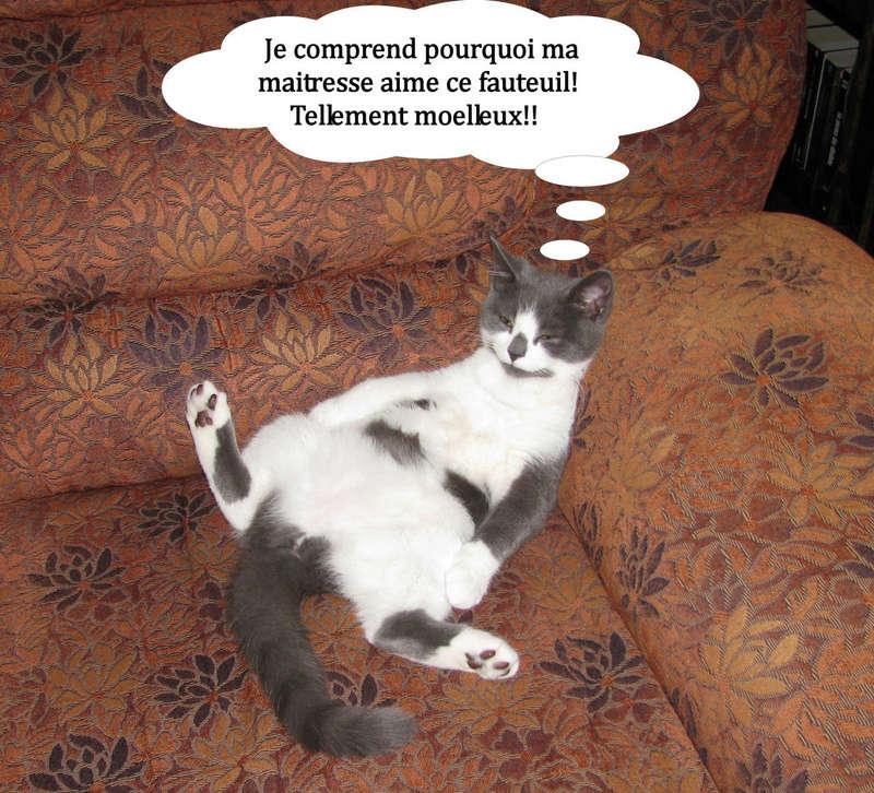 Des chats par milliards !!! Abby_s10