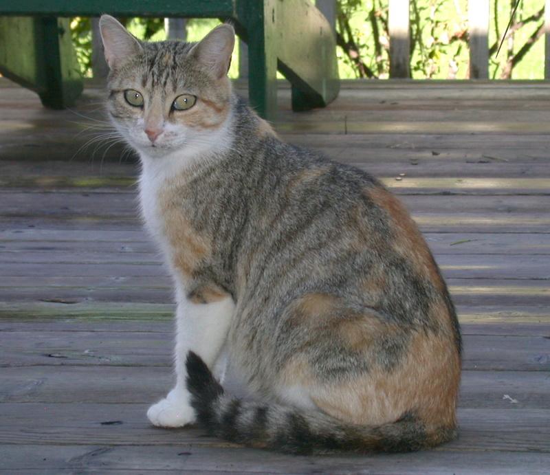 Des chats par milliards !!! Pictur10