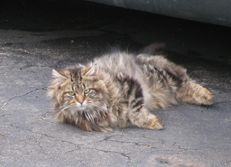 Des chats par milliards !!! Pictur11
