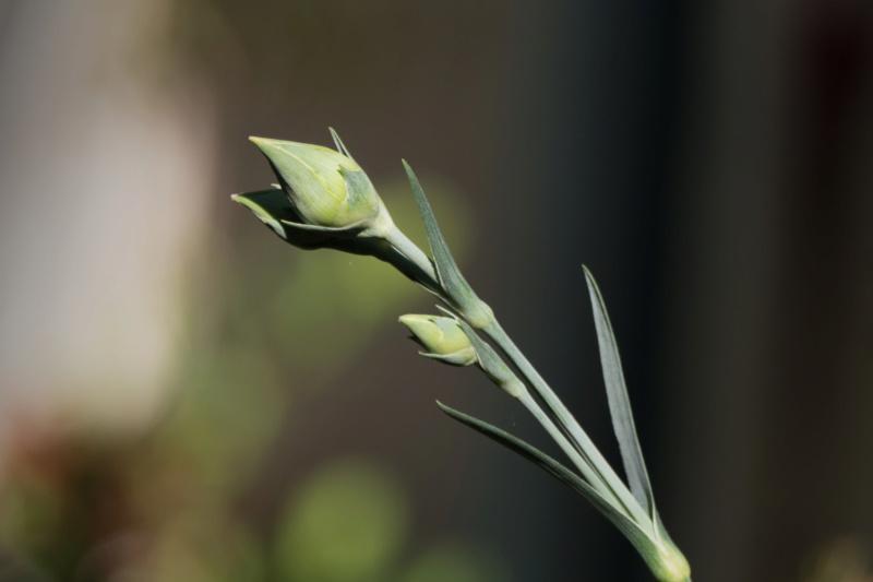 Essais floraux B310