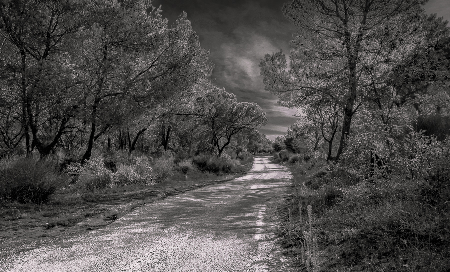 Un petit chemin ... Chemin10