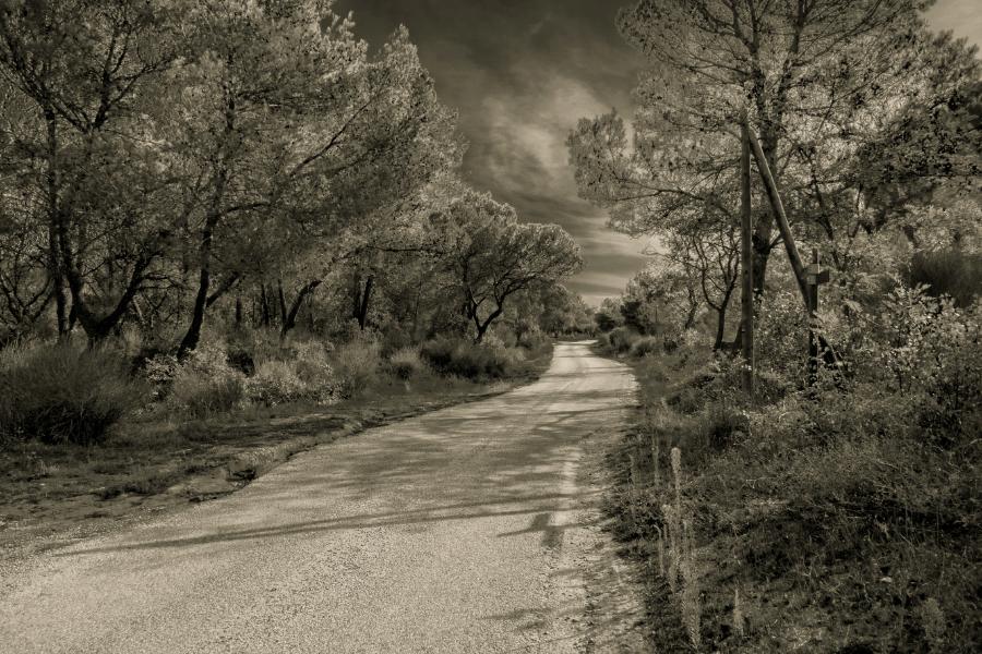 Un petit chemin ... Chemin12