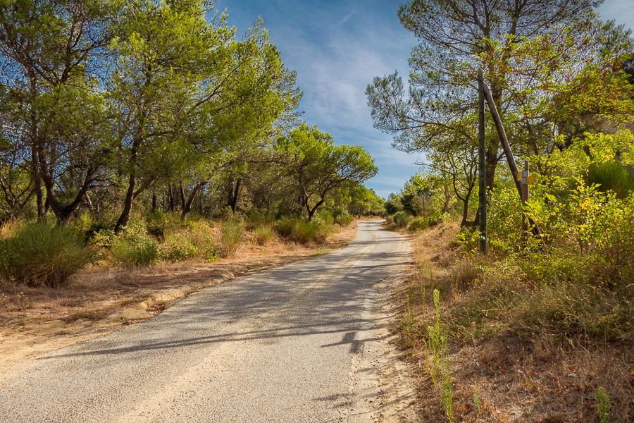 Un petit chemin ... Chemin13