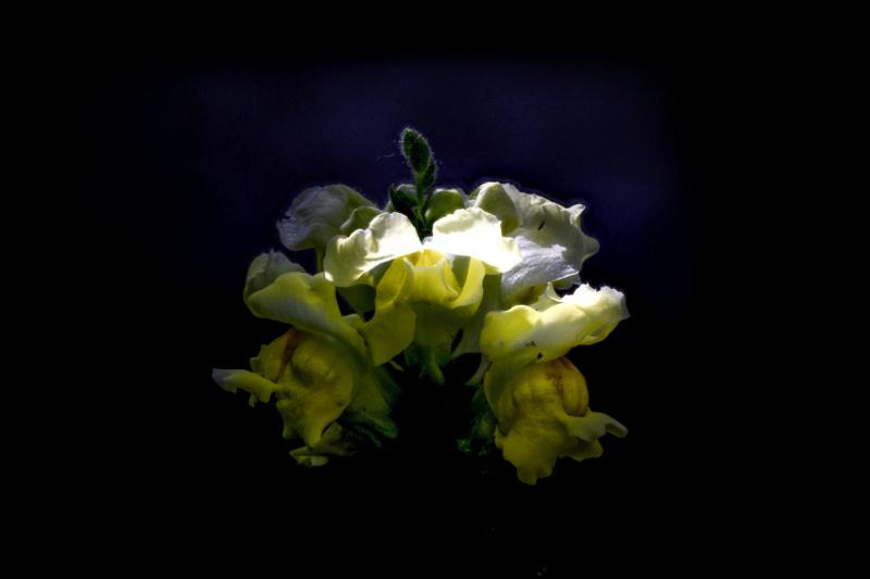 Essais floraux Essai_10