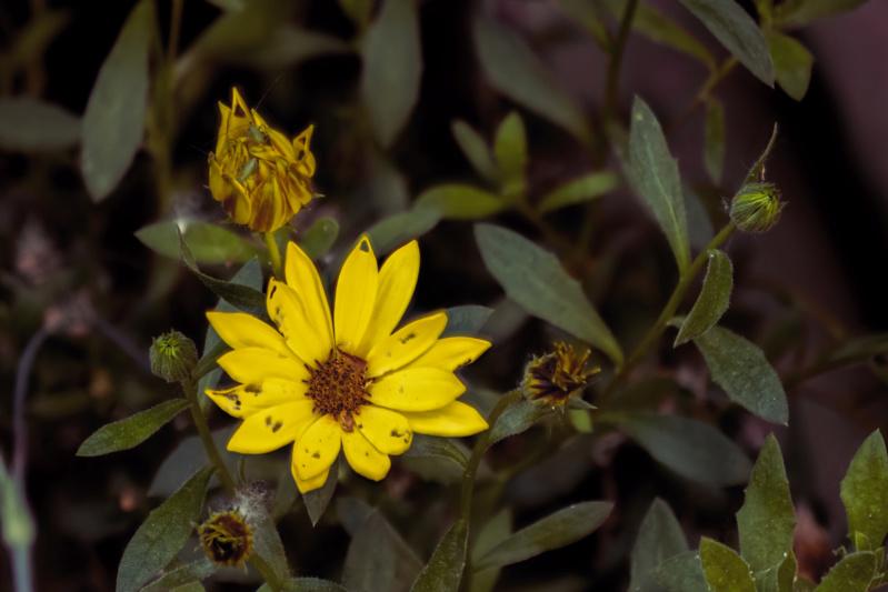 Essais floraux Essai_13