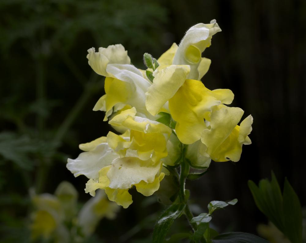 Robes transparentes et diaphanes Flower10