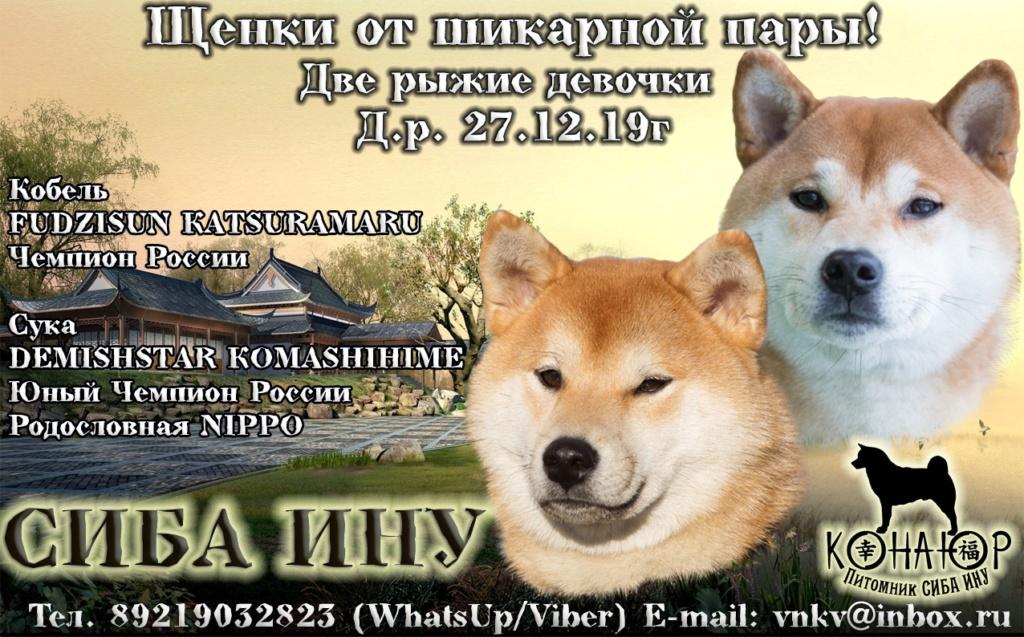 Санкт-Петербург, Конаюр. 27.12.19г две девочки от Мару и Кнопы Qlhtkh10