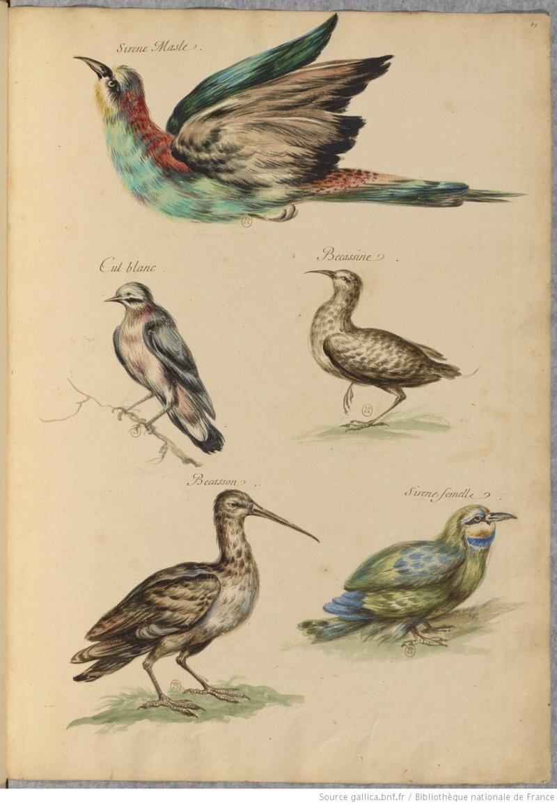 Liens utiles - Page 3 Oiseau10