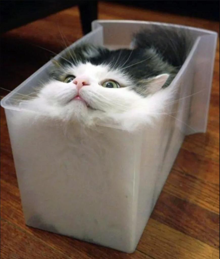 Fotos de animales de todo tipo incluyendo mascotas que más te gustan - Página 24 Cattur10