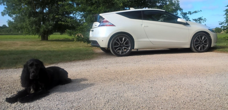 Je m'présente...Honda rien d'autre.. :-) Wp_20343