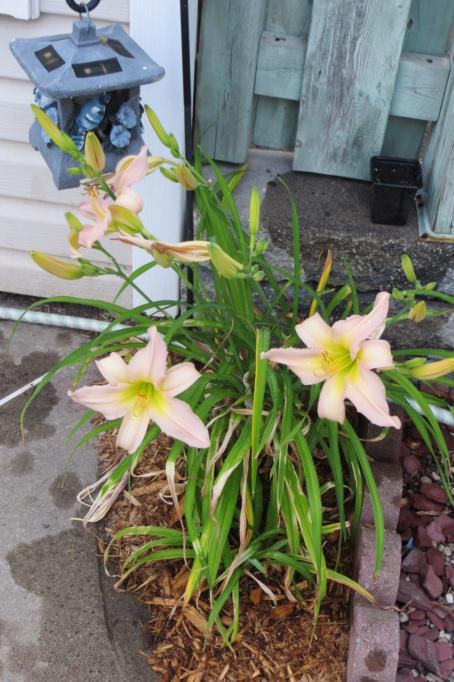 Pas eu de printemps - mais l'été est arrivé chez MarieM!! - Page 3 Dallas10