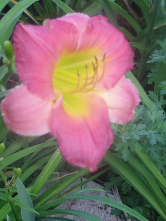 Pas eu de printemps - mais l'été est arrivé chez MarieM!! - Page 3 Hzomzo11