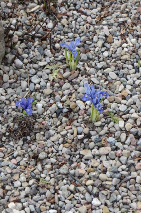 Au jardin de MarieM saison 2020 Img_1216