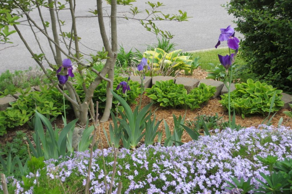 Au jardin de MarieM saison 2020 Img_1421