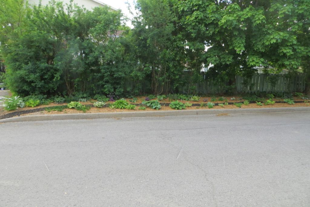 Au jardin de MarieM saison 2020 Img_1427