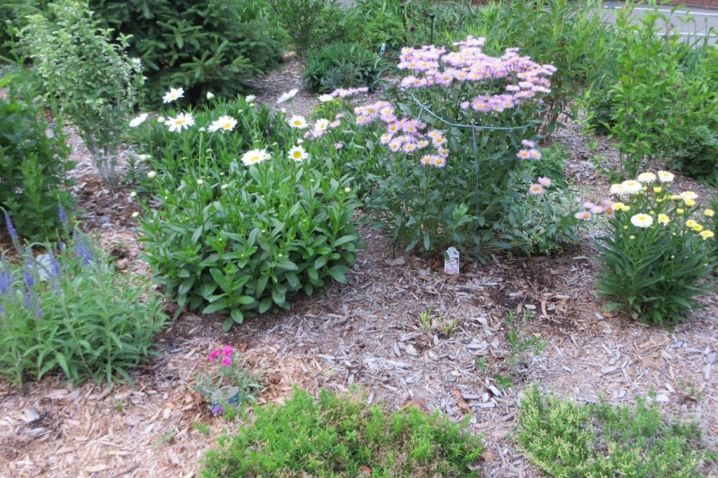 Au jardin de MarieM saison 2020 Img_1514