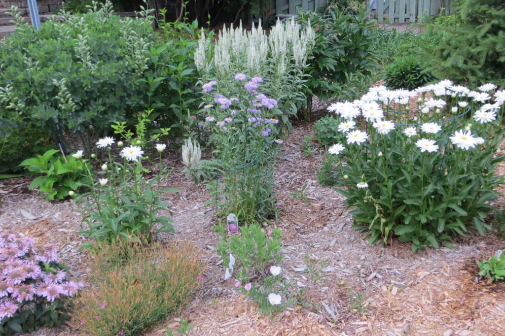 Au jardin de MarieM saison 2020 Img_1515