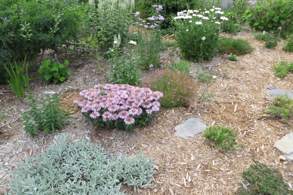Au jardin de MarieM saison 2020 Img_1516