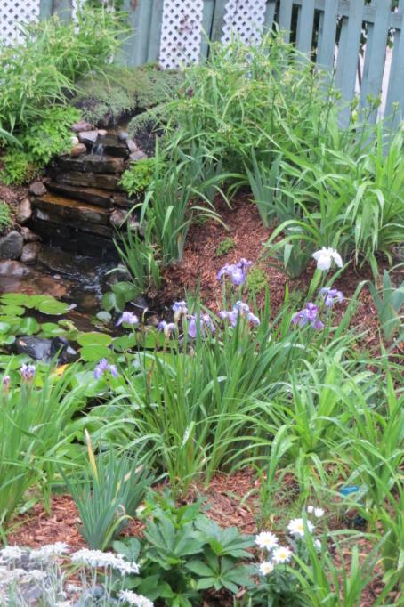 Au jardin de MarieM saison 2020 Img_1518