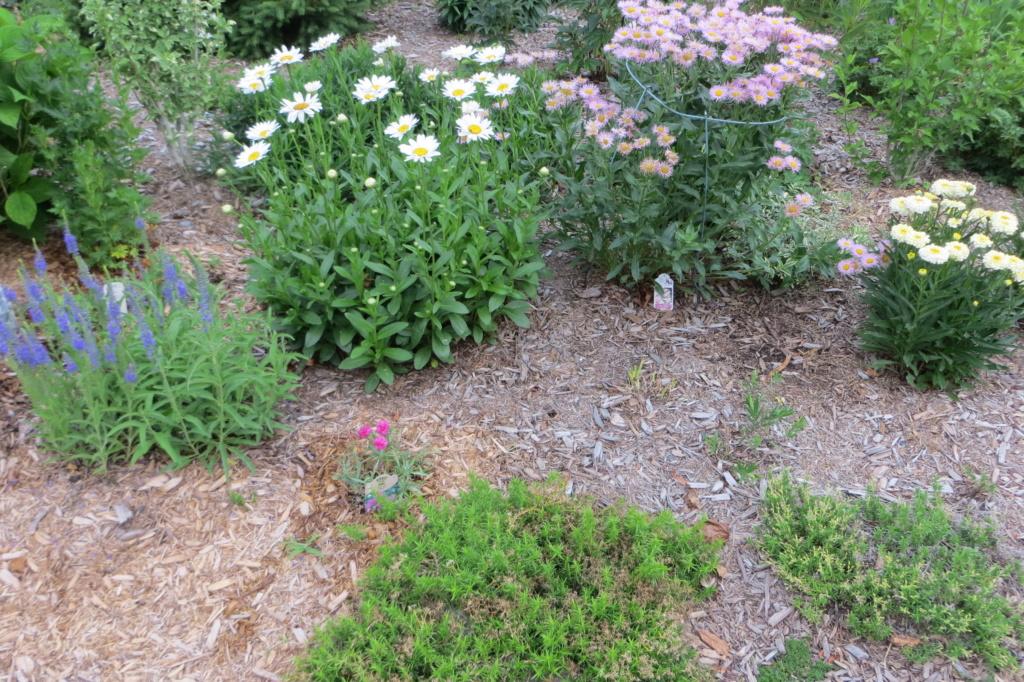 Au jardin de MarieM saison 2020 Img_1611