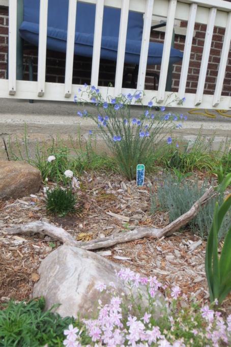 Au jardin de MarieM saison 2020 Linum_10