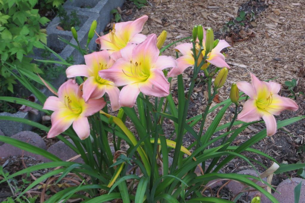 Pas eu de printemps - mais l'été est arrivé chez MarieM!! - Page 3 Nile_c12