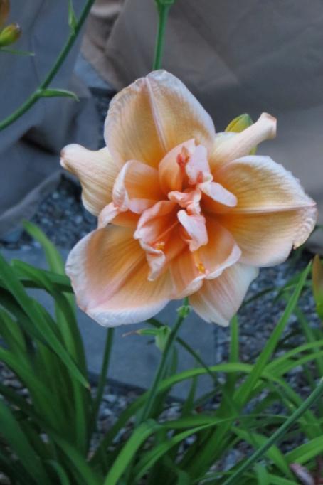 Pas eu de printemps - mais l'été est arrivé chez MarieM!! - Page 3 Peach_10