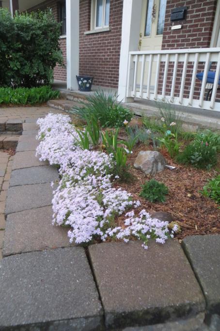 Au jardin de MarieM saison 2020 Phlox_12