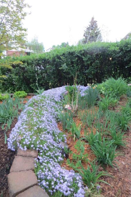 Au jardin de MarieM saison 2020 Phlox_14
