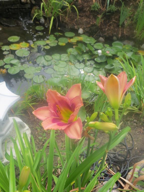 Pas eu de printemps - mais l'été est arrivé chez MarieM!! - Page 3 Svenga11