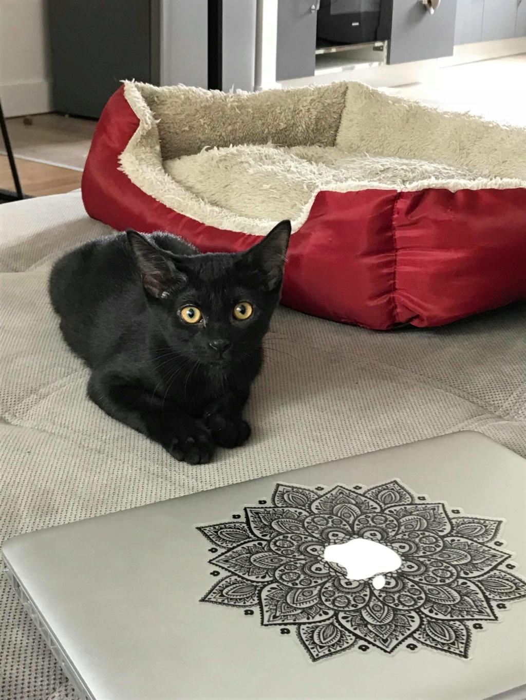 Oxana, chatonne noire, née le 03 mai 2018 39155710